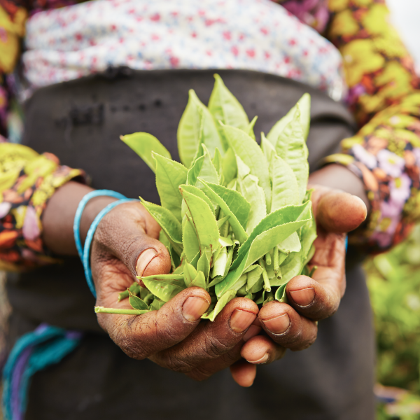 Kagiso Trust (through the Tyala Impact Fund) and Potatoes South Africa